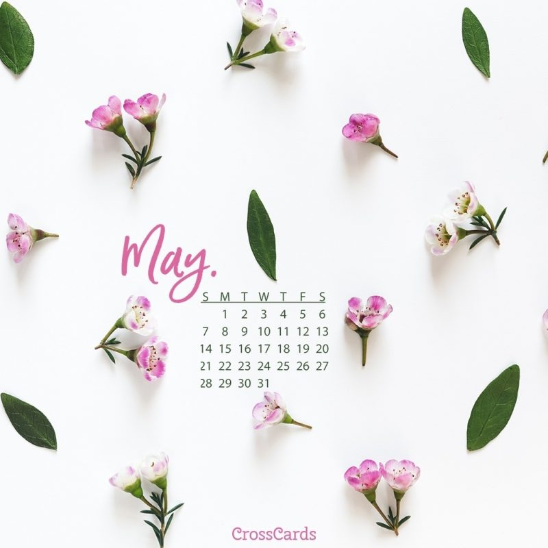 10 Top May 2017 Calendar Wallpaper FULL HD 1080p For PC Background 2018 free download may 2017 pink flowers desktop calendar free may wallpaper 800x800