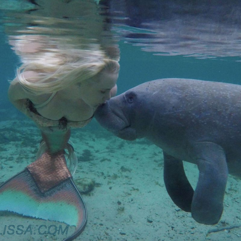 10 Latest A Picture Of A Real Mermaid FULL HD 1080p For PC Background 2018 free download mermaid melissa the loving manatees video mermaid melissa rea 800x800