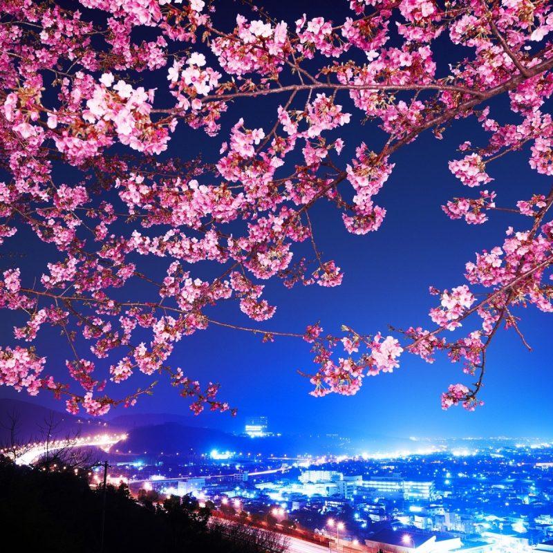 10 New Japanese Cherry Blossoms Wallpaper FULL HD 1080p For PC Desktop 2018 free download mimura japan sakura cherry blossom highway city night trees flowers 800x800