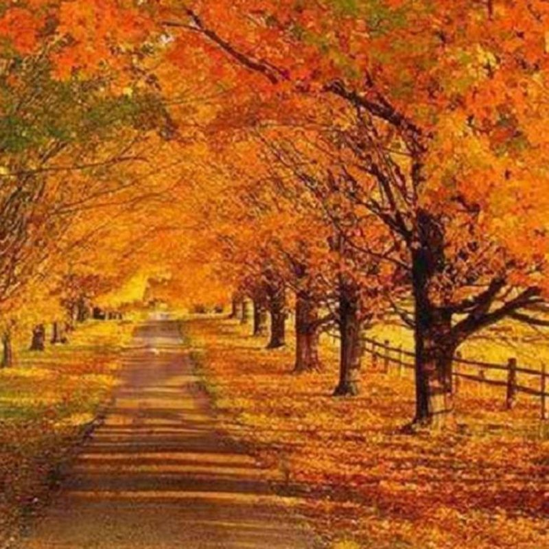 10 New Fall Scene Desktop Background FULL HD 1080p For PC Background 2018 free download misc tree lined autumn road nature trees fence leaves 1080p 800x800