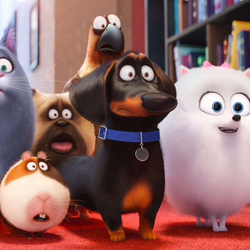 10 New Secret Life Of Pets Wallpaper FULL HD 1920×1080 For PC Desktop 2018 free download movies the secret life of pets wallpapers desktop phone tablet 800x800