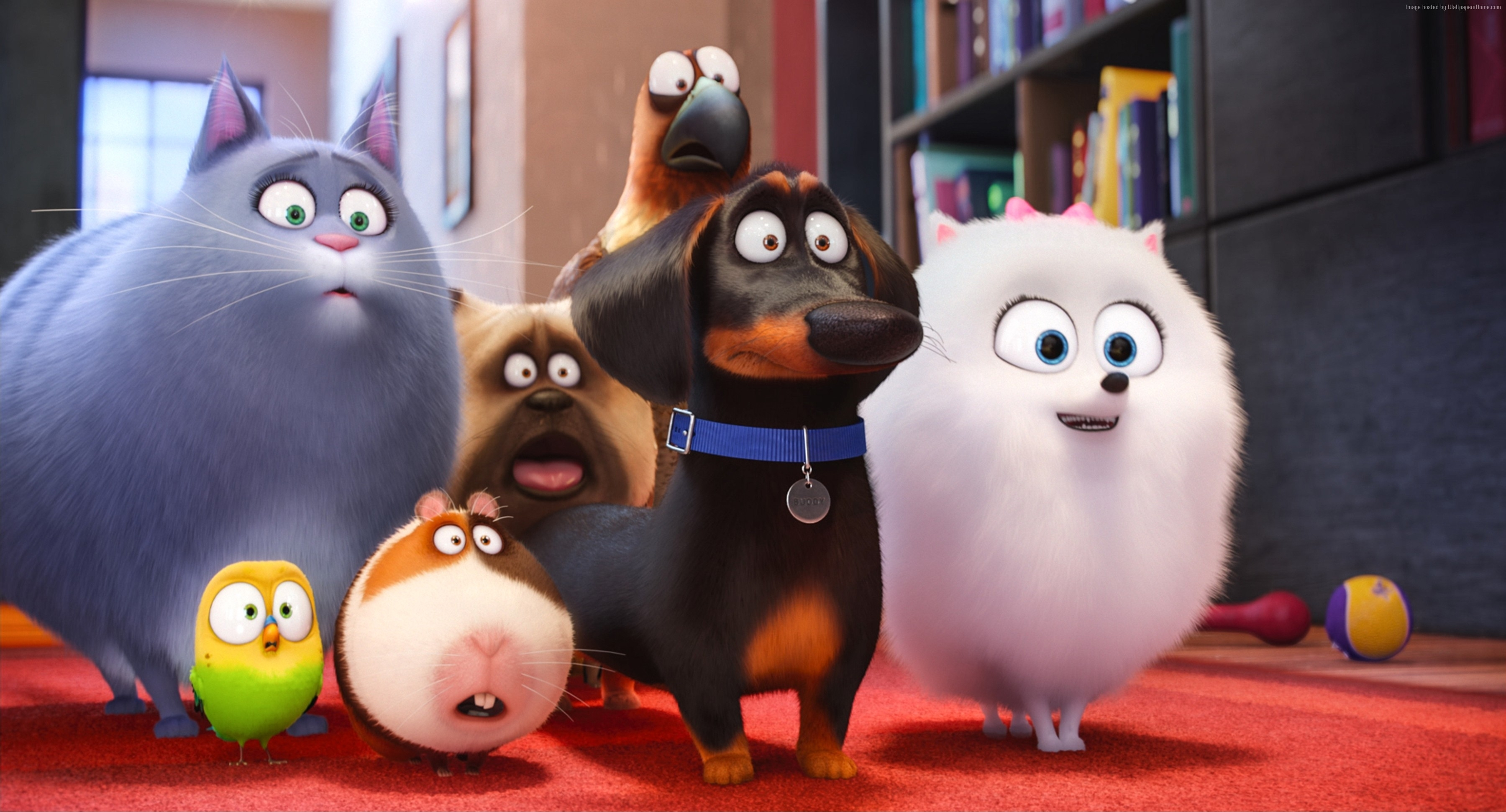 movies the secret life of pets wallpapers (desktop, phone, tablet