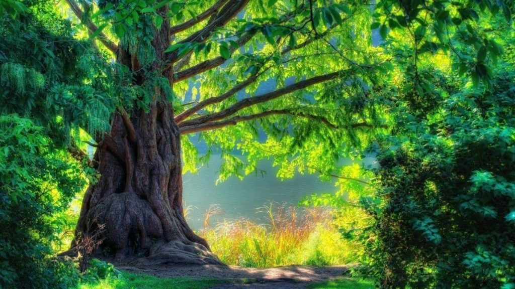 10 Best Wallpaper Hd 1080P 3D Nature FULL HD 1080p For PC Background 2020 free download nature hd wallpapers 1080p wallpaper cave 1024x576