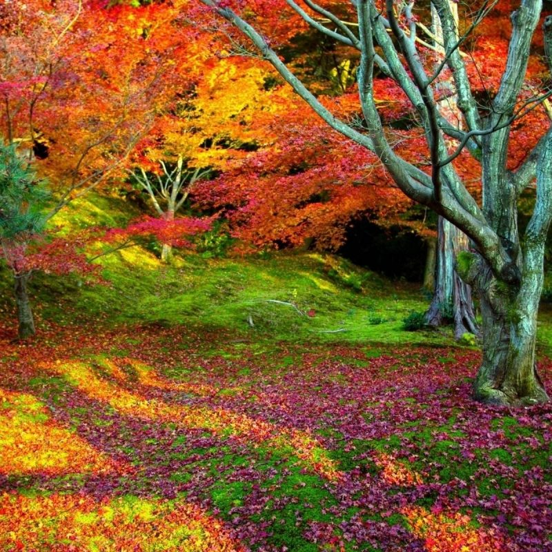 10 Top Colorful Nature Wallpaper Hd FULL HD 1920×1080 For PC Background 2021 free download nature landscape colors of nature wallpapers desktop phone 800x800