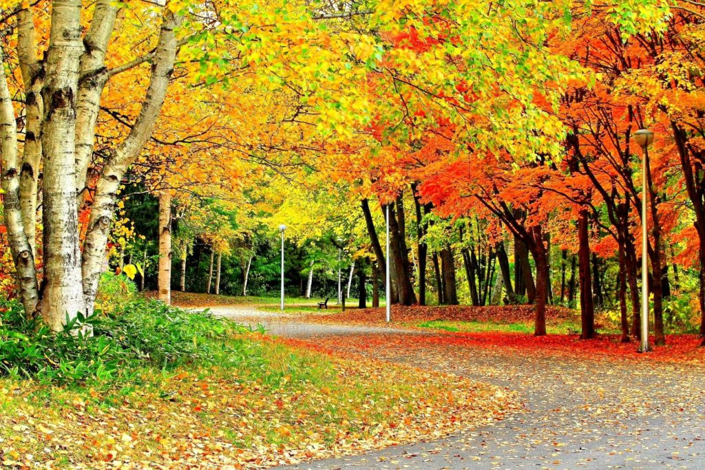 10 Most Popular Nature Wallpaper Desktop Background Full Screen FULL HD 1920×1080 For PC Desktop 2018 free download nature seasons splendor leaves nature colors trees forces autumn 1024x683