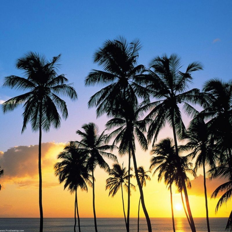 10 Latest Palm Tree Desktop Backgrounds FULL HD 1080p For PC Desktop 2018 free download nature summer desktop wallpaper pics 51 photos pinterest 800x800