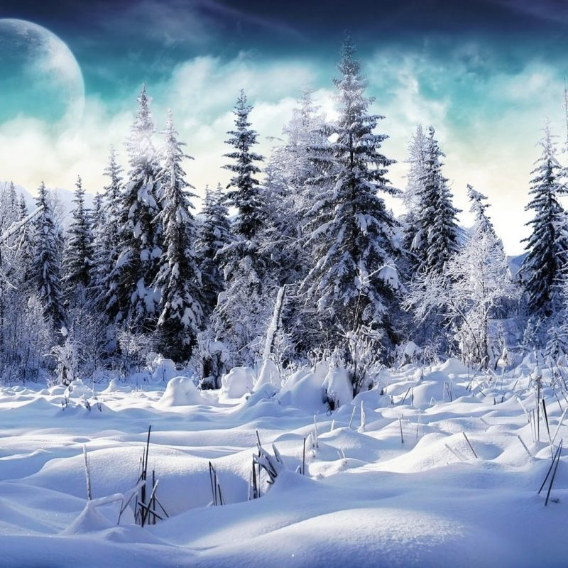 10 Top Hd Snow Wallpapers 1080P FULL HD 1920×1080 For PC Background 2018 free download nature trees full of snow picture nr 60664 800x800