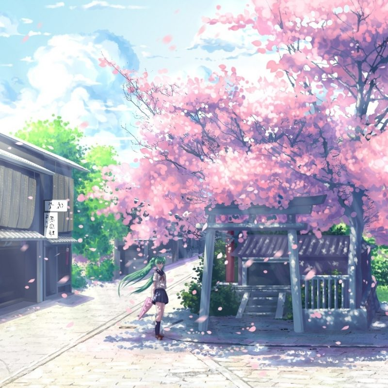 10 Most Popular Anime Cherry Blossom Wallpaper FULL HD 1080p For PC Background 2018 free download new cherry blossom wallpaper desktop 1920x1080 anime design anime 800x800