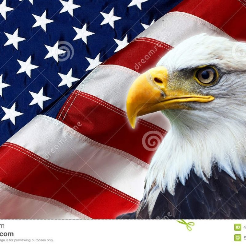 10 Latest American Flag Eagle Background FULL HD 1080p For PC Desktop 2021 free download north american bald eagle on american flag stock photo image of 800x800