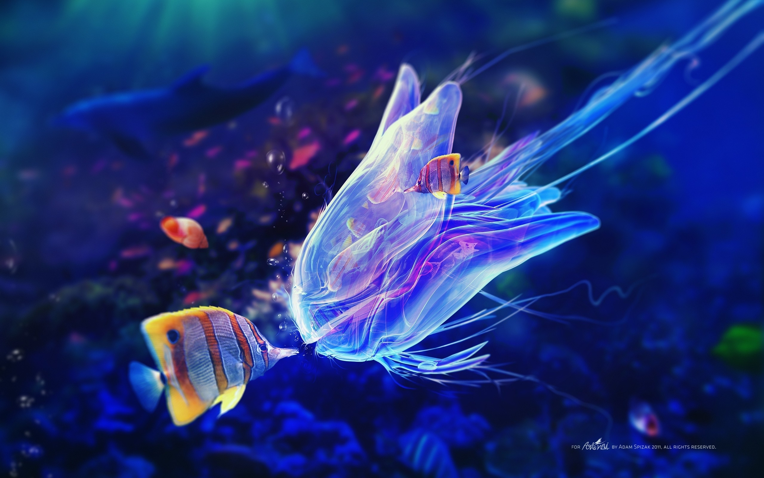 ocean life pics | jelly fish kiss ocean life - new hd wallpapers