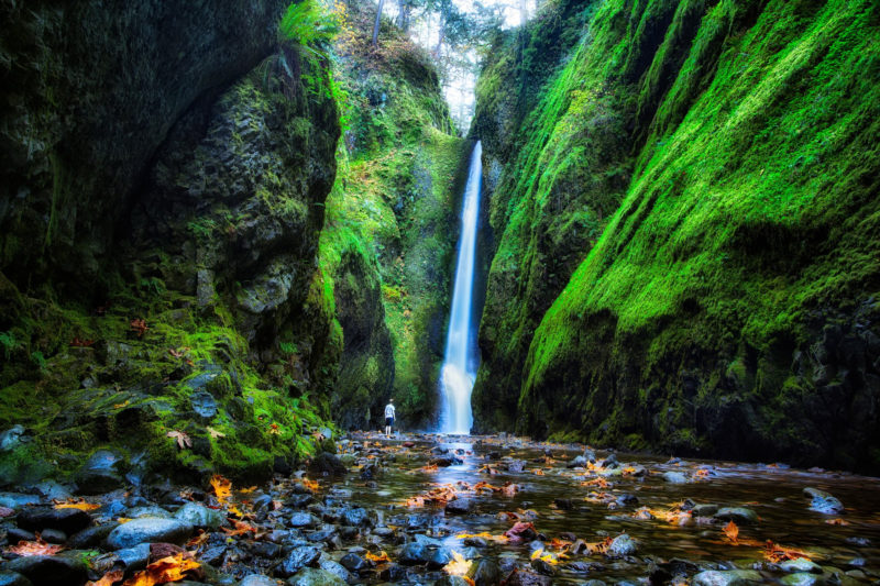 10 Most Popular Oregon Nature Pictures FULL HD 1080p For PC Background 2018 free download oregon nature f hd wallpaper background images 800x533