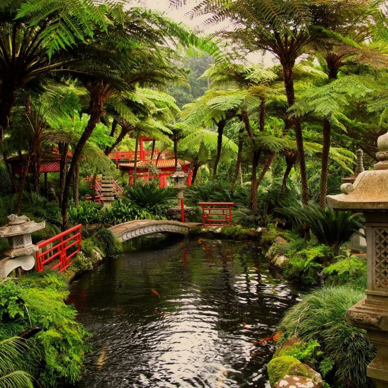 10 New Japanese Garden Wallpaper Night FULL HD 1920×1080 For PC Desktop 2018 free download other japanese garden flowers bridge water trees bushes free 800x800