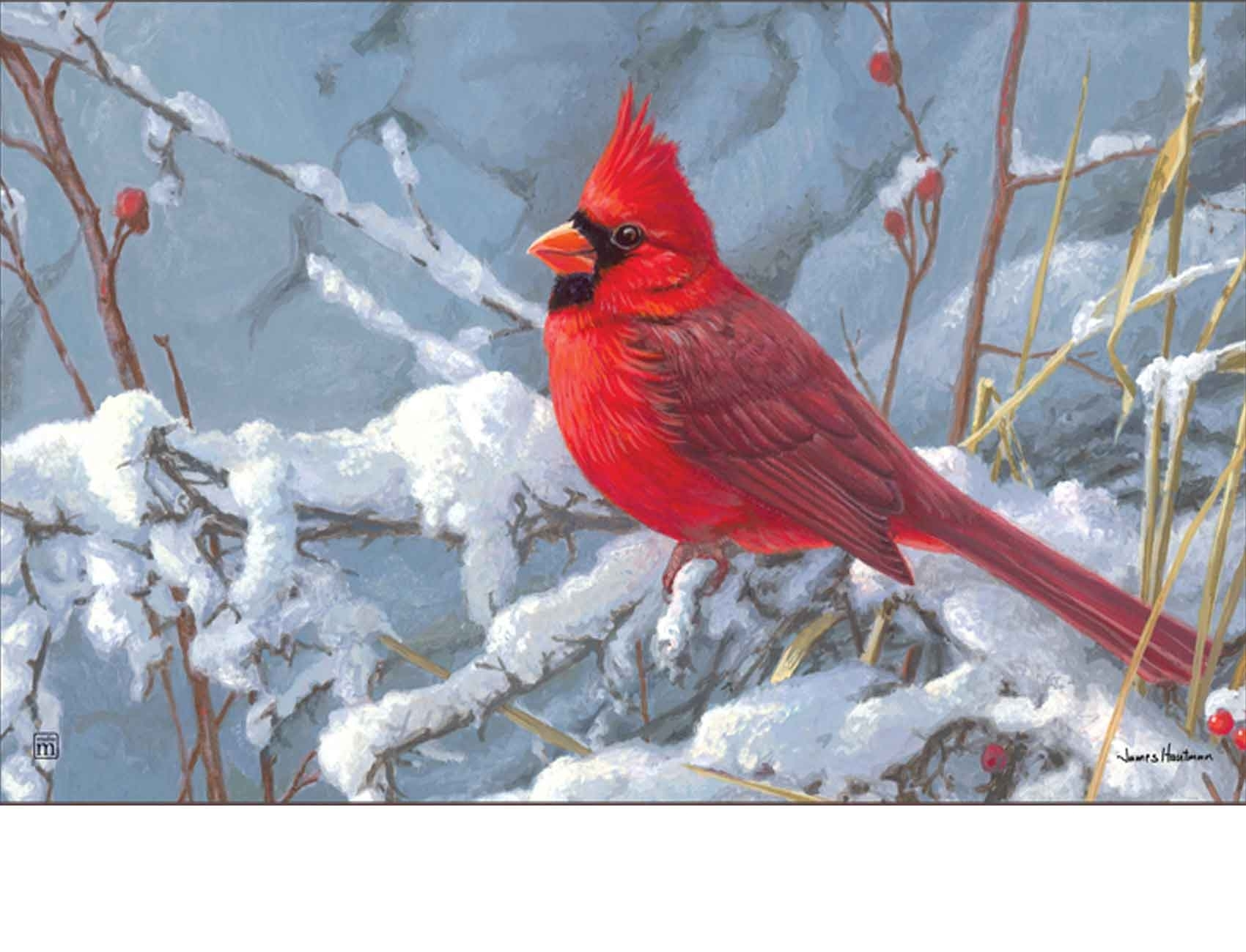 10 Most Popular Cardinal In Snow Pictures FULL HD 1920×1080 For PC Background
