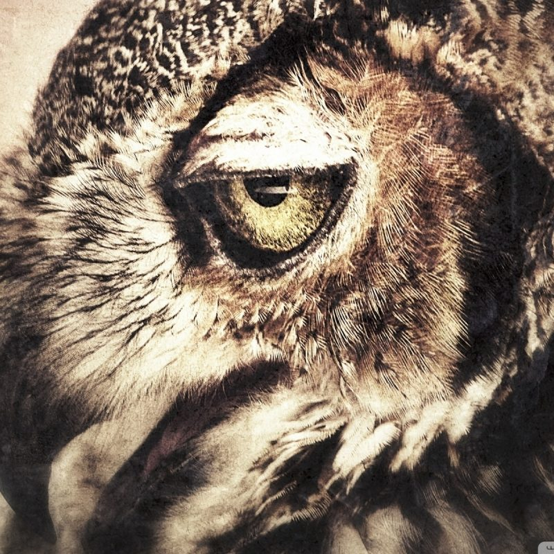 10 Top Owl Art Desktop Wallpaper FULL HD 1920×1080 For PC Desktop 2018 free download owl art e29da4 4k hd desktop wallpaper for 4k ultra hd tv e280a2 wide ultra 800x800