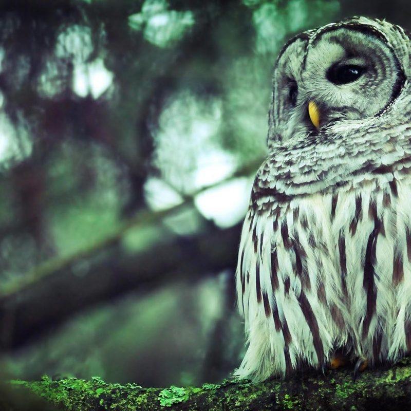10 Top Owl Desktop Wallpaper Hd FULL HD 1920×1080 For PC Desktop 2018 free download owl desktop wallpaper 5908 1920x1080 px hdwallsource 800x800