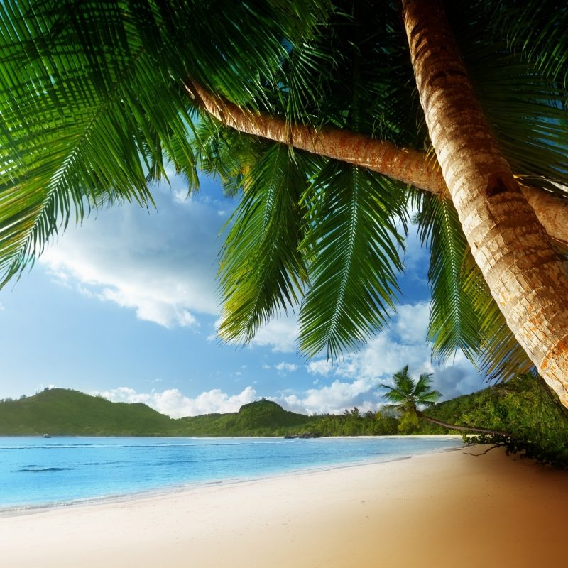 10 Top Beach Palm Tree Background FULL HD 1920×1080 For PC Background 2018 free download palm tree background 22011 2560x1600 px hdwallsource 800x800
