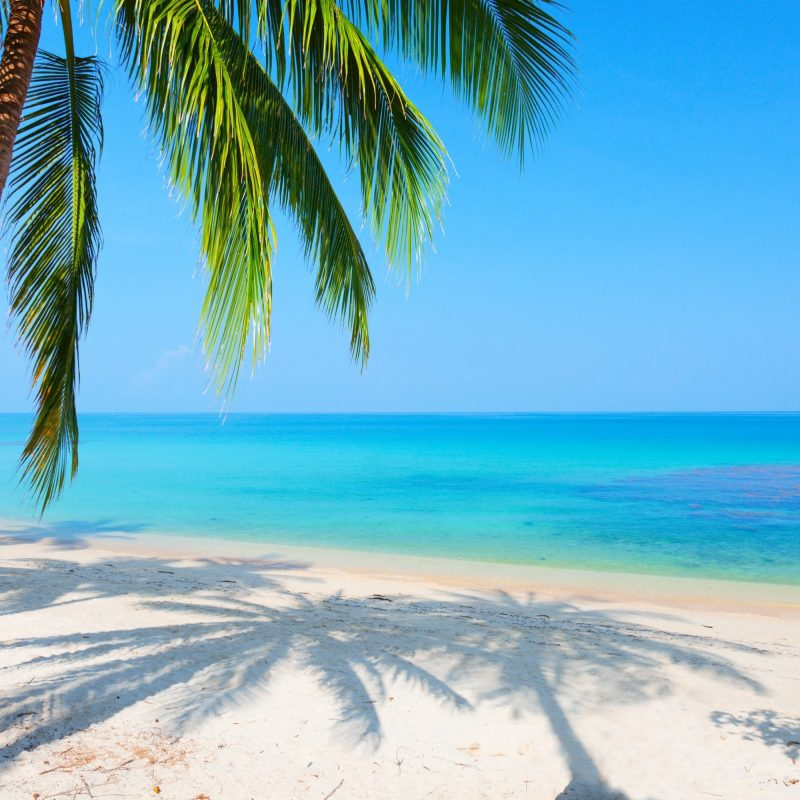 10 Top Beach Palm Tree Background FULL HD 1920×1080 For PC Background 2018 free download palm tree background c2b7e291a0 download free hd backgrounds for desktop 800x800