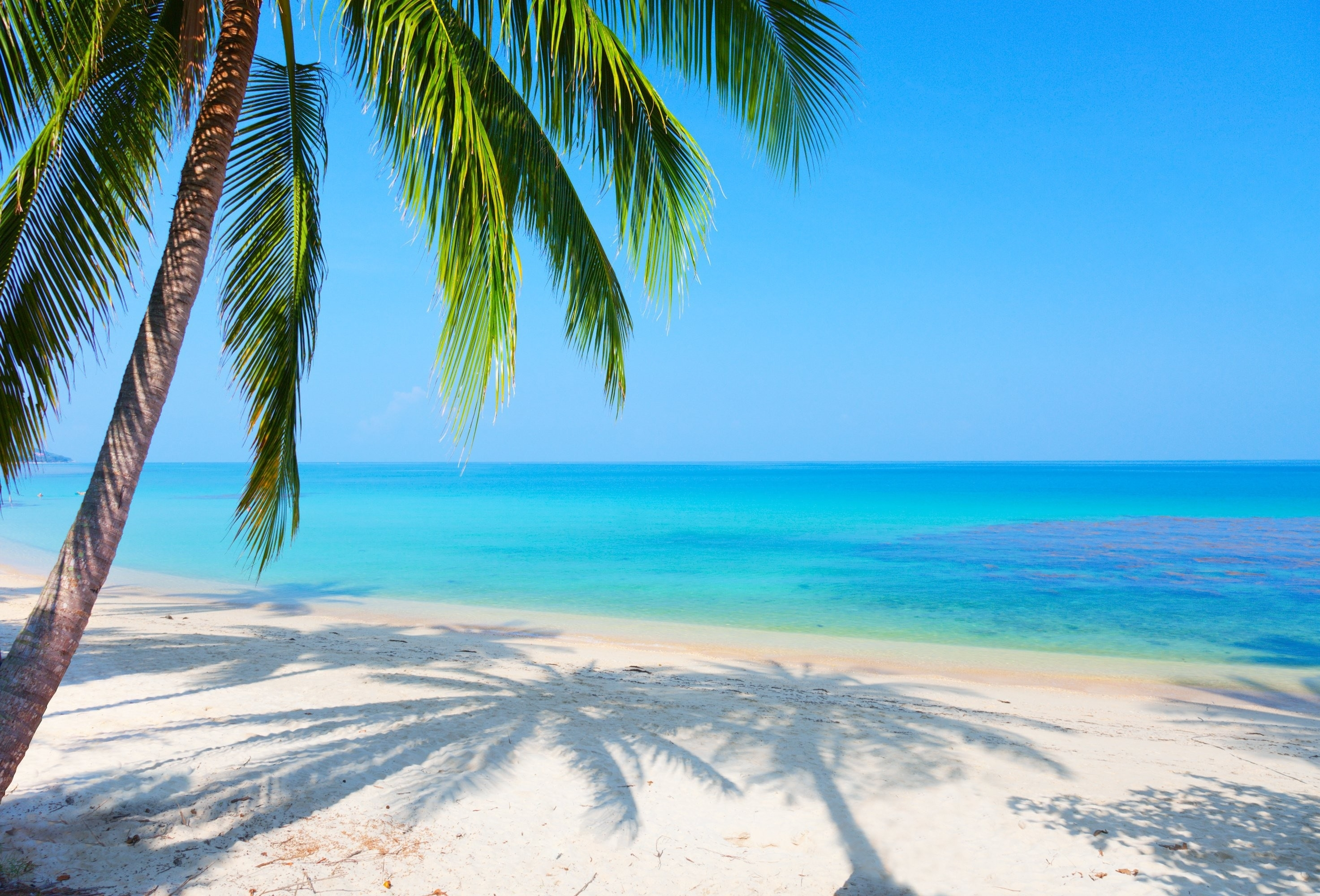 palm tree background ·① download free hd backgrounds for desktop