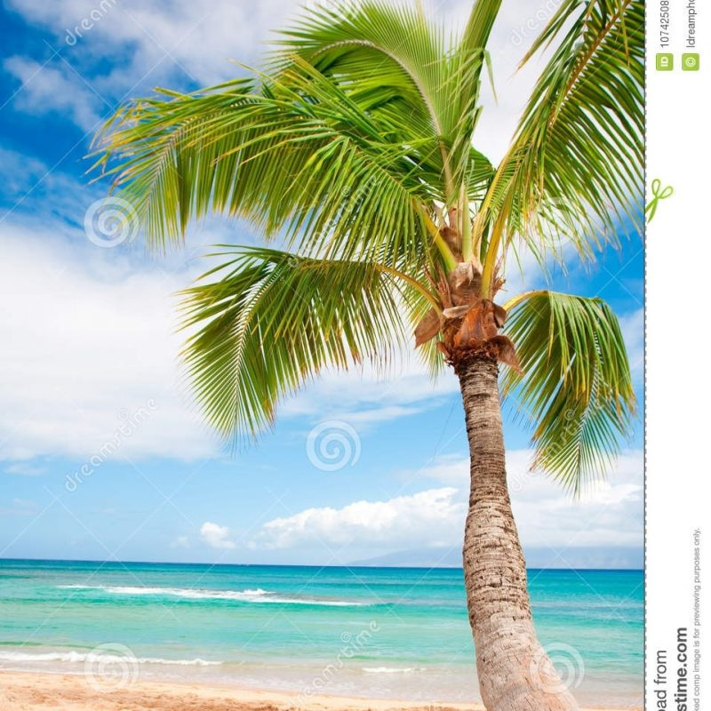 10 Top Beach Palm Tree Background FULL HD 1920×1080 For PC Background 2018 free download palm tree beach background stock photo image of beautiful 10742508 800x800