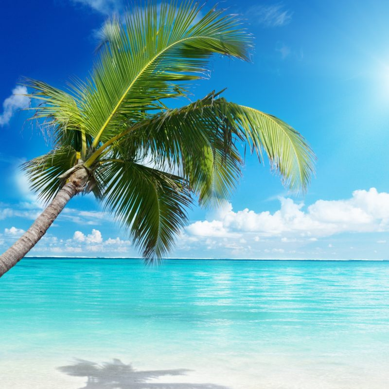 10 Latest Palm Tree Beach Wallpaper FULL HD 1920×1080 For PC Background 2018 free download palm tree beach e29da4 4k hd desktop wallpaper for 4k ultra hd tv e280a2 wide 800x800