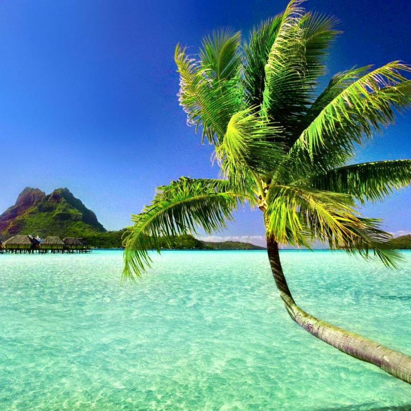 10 Top Beach Palm Tree Background FULL HD 1920×1080 For PC Background 2018 free download palm tree beach wallpapers wallpaper cave 2 800x800