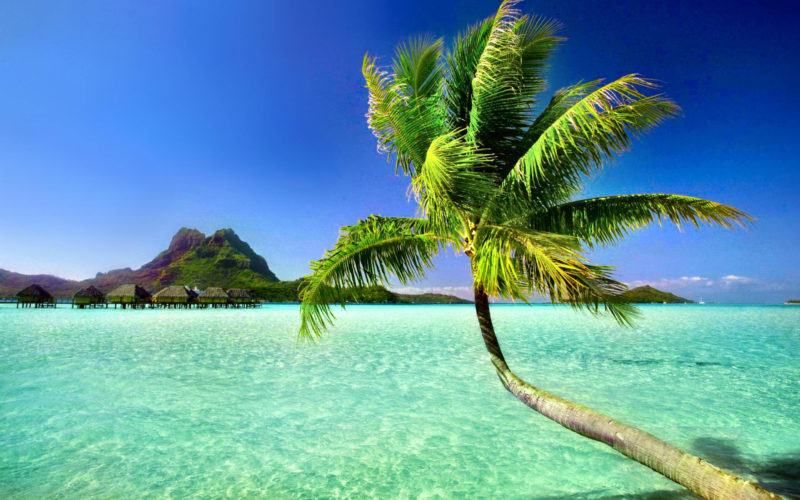 10 New Palm Tree And Beach Pictures FULL HD 1080p For PC Background 2018 free download palm tree beach wallpapers wallpaper cave 3 800x500
