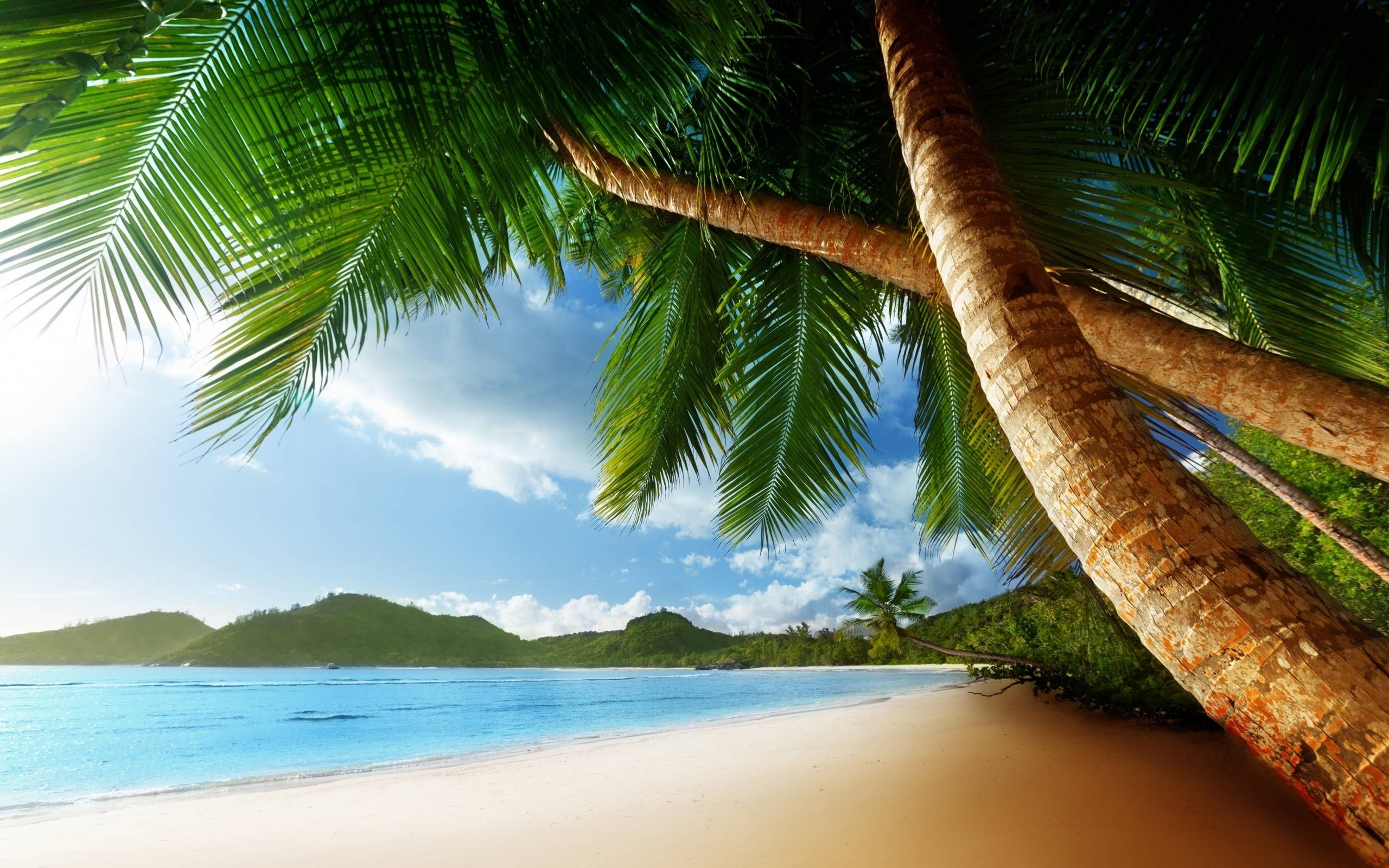 10 New Beach And Palm Trees Background FULL HD 1920×1080 For PC Background