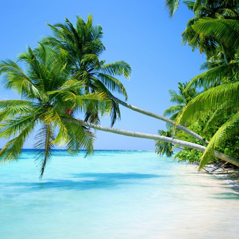 10 Latest Palm Tree Beach Wallpaper FULL HD 1920×1080 For PC Background 2018 free download palm tree beaches sand sea wallpapers 800x800
