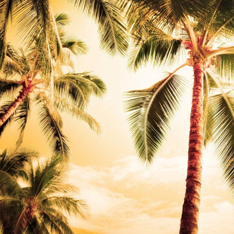 10 Best Palm Trees Wallpaper Hd FULL HD 1920×1080 For PC Background 2018 free download palm tree free hd wallpapers media file pixelstalk 1 800x800