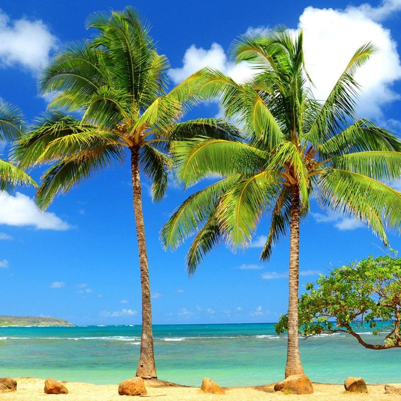 10 Latest Palm Tree Beach Wallpaper FULL HD 1920×1080 For PC Background 2018 free download palm tree wallpapers wallpaper cave 2 800x800