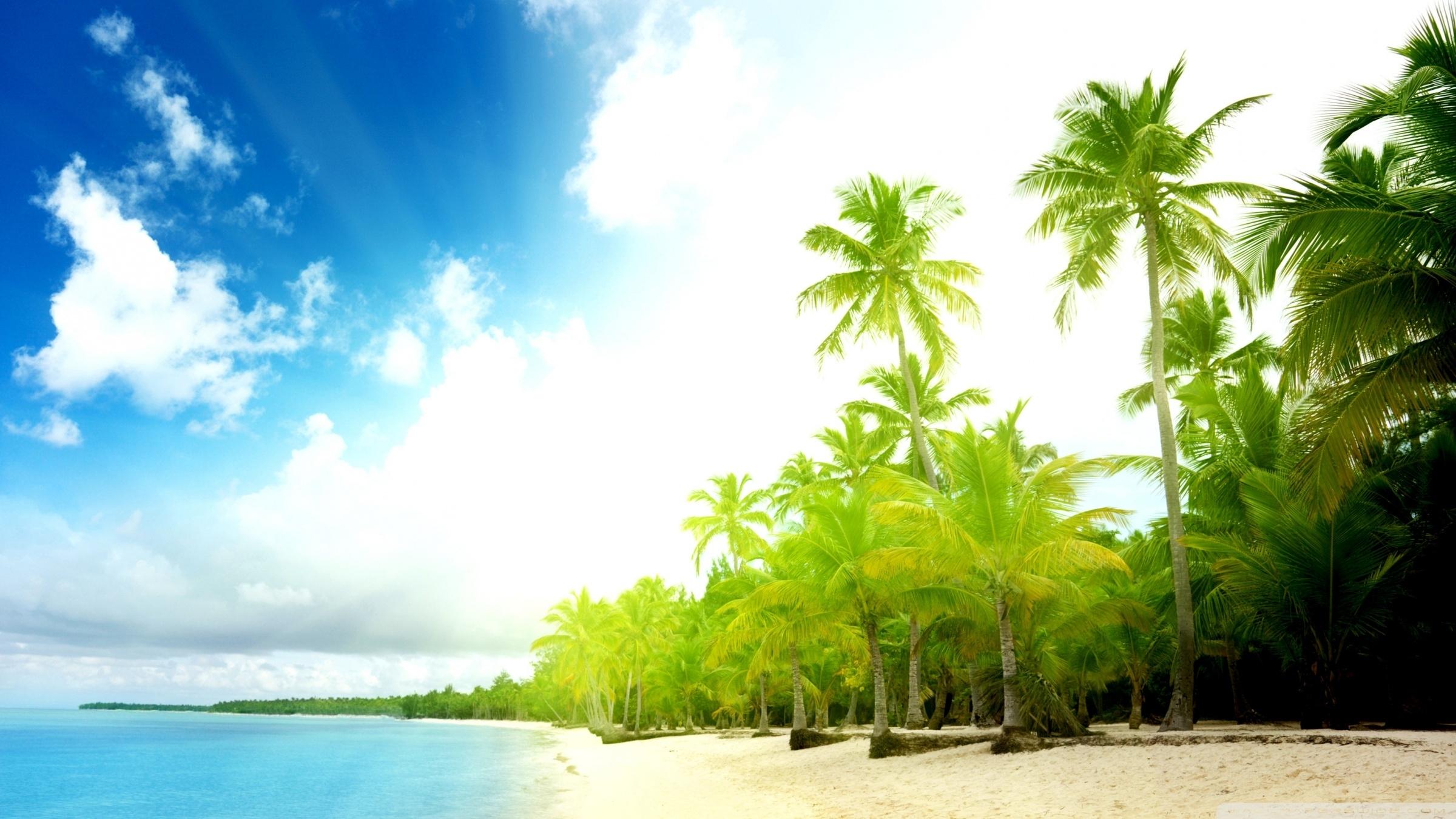 palm trees beach ❤ 4k hd desktop wallpaper for 4k ultra hd tv