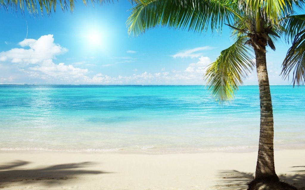 10 New Beach And Palm Trees Background FULL HD 1920×1080 For PC Background 2018 free download palm trees beach google search painting pinterest palm 1024x640