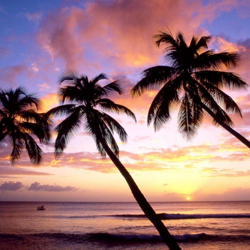 10 Top Beach Palm Tree Background FULL HD 1920×1080 For PC Background 2018 free download palm trees beach wallpapers group 84 1 800x800