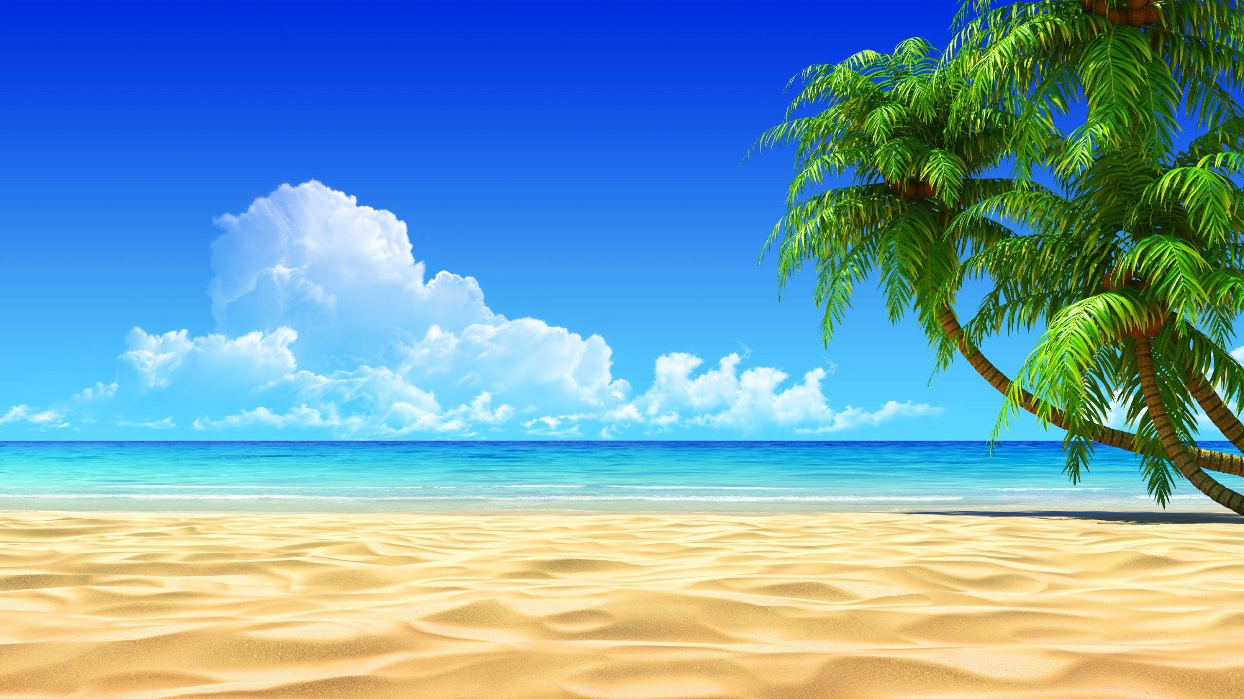 palm trees on a sandy beach - walldevil