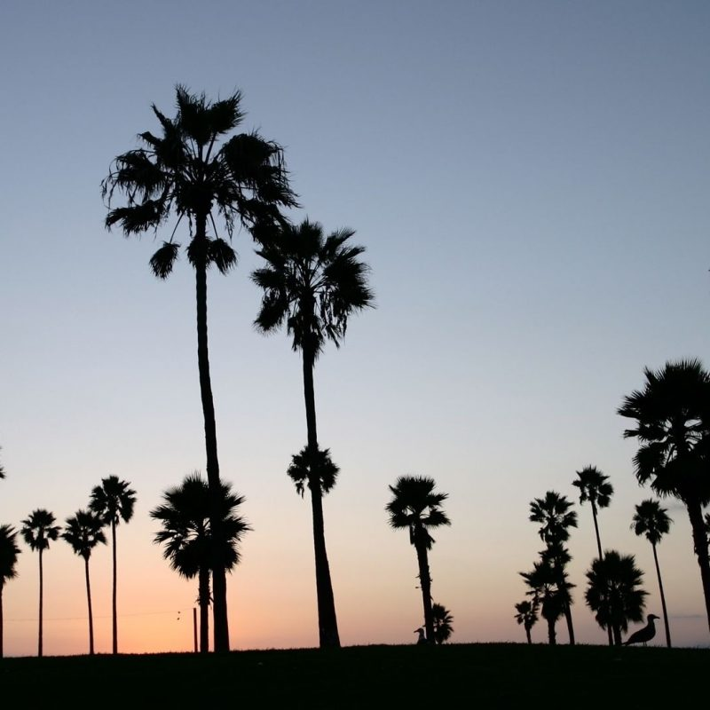 10 Latest Palm Tree Desktop Backgrounds FULL HD 1080p For PC Desktop 2018 free download palm trees silhouette e29da4 4k hd desktop wallpaper for 4k ultra hd tv 800x800