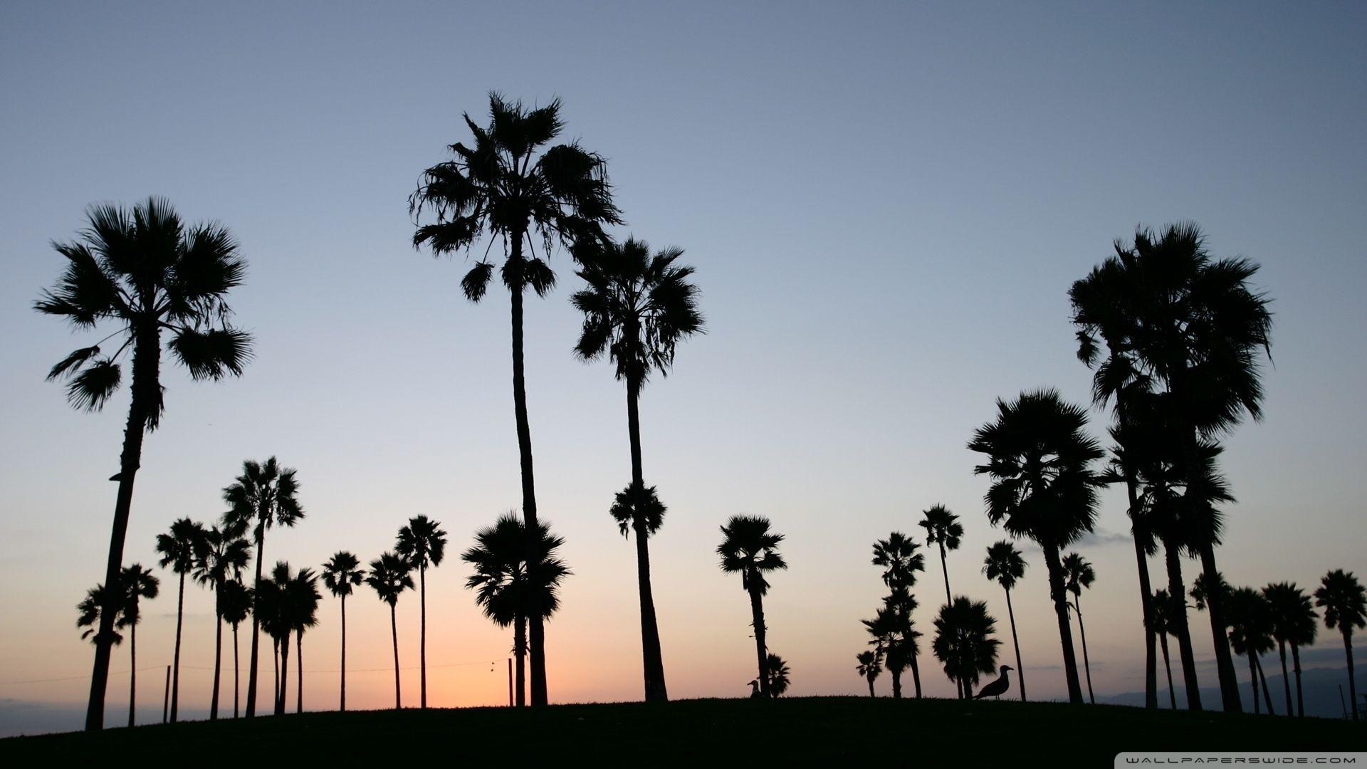 palm trees silhouette ❤ 4k hd desktop wallpaper for 4k ultra hd tv
