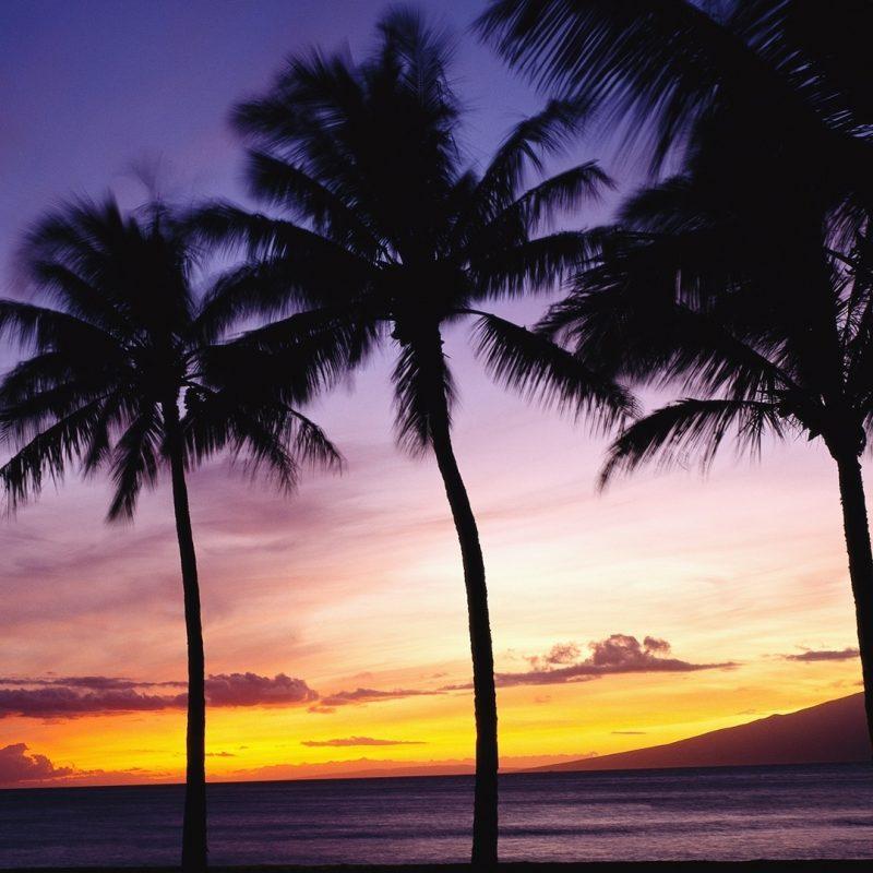 10 Latest Palm Tree Sunset Wallpaper FULL HD 1920×1080 For PC Desktop 2018 free download palm trees sunset e29da4 4k hd desktop wallpaper for 4k ultra hd tv 2 800x800