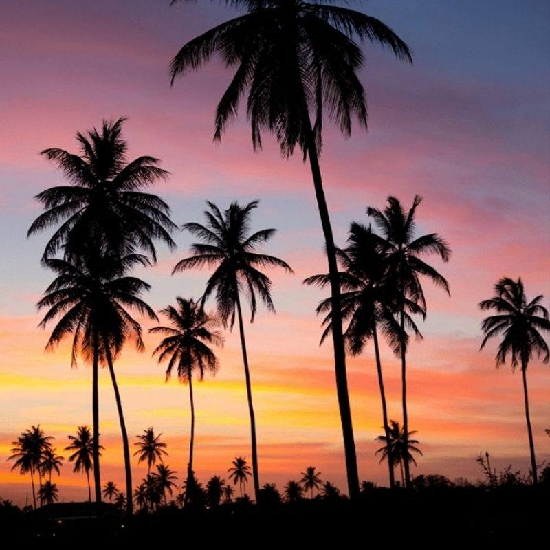 10 Latest Palm Tree Sunset Wallpaper FULL HD 1920×1080 For PC Desktop 2018 free download palms sunset iphone wallpaper beauty pinterest palm sunset 800x800