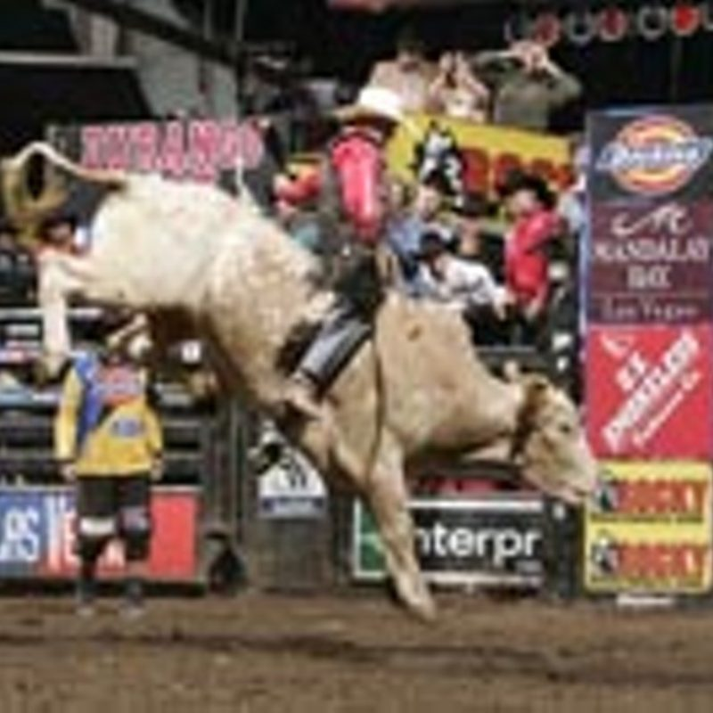 10 Most Popular Professional Bull Riders Inc FULL HD 1080p For PC Background 2018 free download pbr aint just a beer shootin the bull with justin mcbride rec 800x800