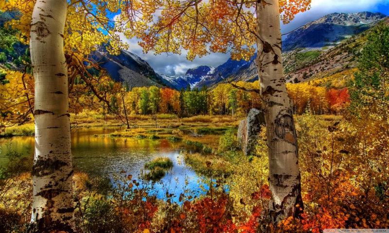10 New Autumn Scenes Wallpaper FULL HD 1080p For PC Background 2018 free download perfect autumn scenery e29da4 4k hd desktop wallpaper for 4k ultra hd tv 1 800x480