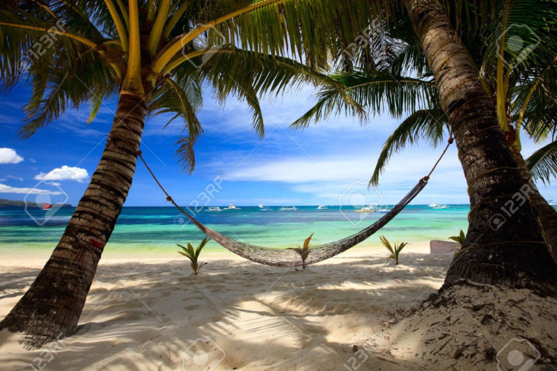 10 New Palm Tree And Beach Pictures FULL HD 1080p For PC Background 2018 free download perfect tropical beach with palm trees and hammock stock photo 800x533