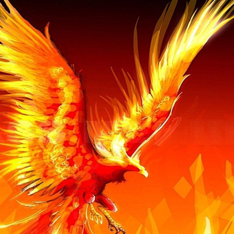 10 Latest Pics Of Phoenix Bird FULL HD 1080p For PC Background 2018 free download pheonix bird pictures ninja turtletechrepairs co 800x800