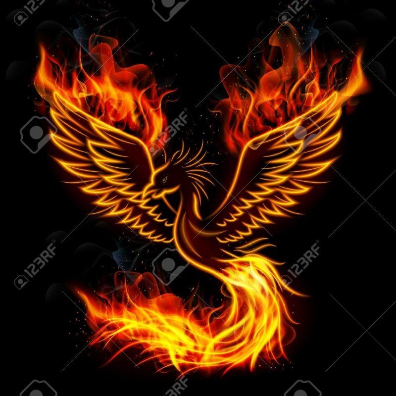 10 Latest Pics Of Phoenix Bird FULL HD 1080p For PC Background 2018 free download phoenix bird stock photos royalty free phoenix bird images 800x800