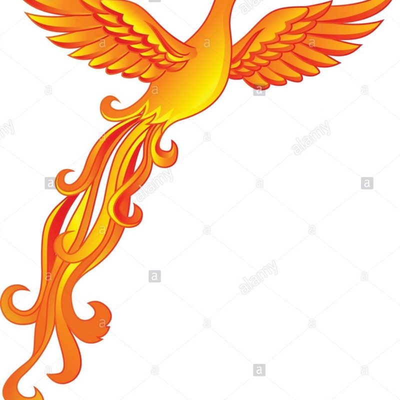 10 Latest Pics Of Phoenix Bird FULL HD 1080p For PC Background 2018 free download phoenix bird stock vector art illustration vector image 64537283 800x800
