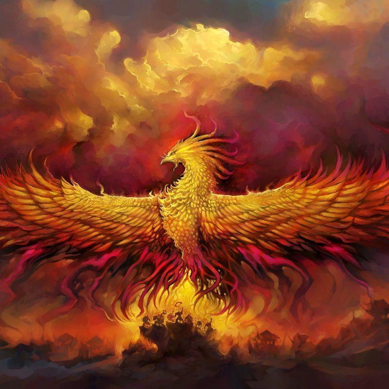 10 Latest Pics Of Phoenix Bird FULL HD 1080p For PC Background 2018 free download phoenix bird wallpaper wallpaper studio 10 tens of thousands hd 800x800