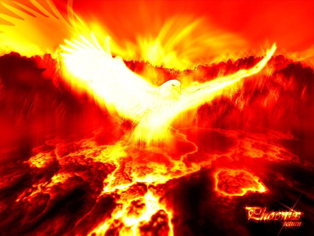 10 Latest Phoenix Rising From The Ashes Wallpaper FULL HD 1920×1080 For PC Background 2020 free download phoenix pictures phoenix myth bird photos gallery 1024x768