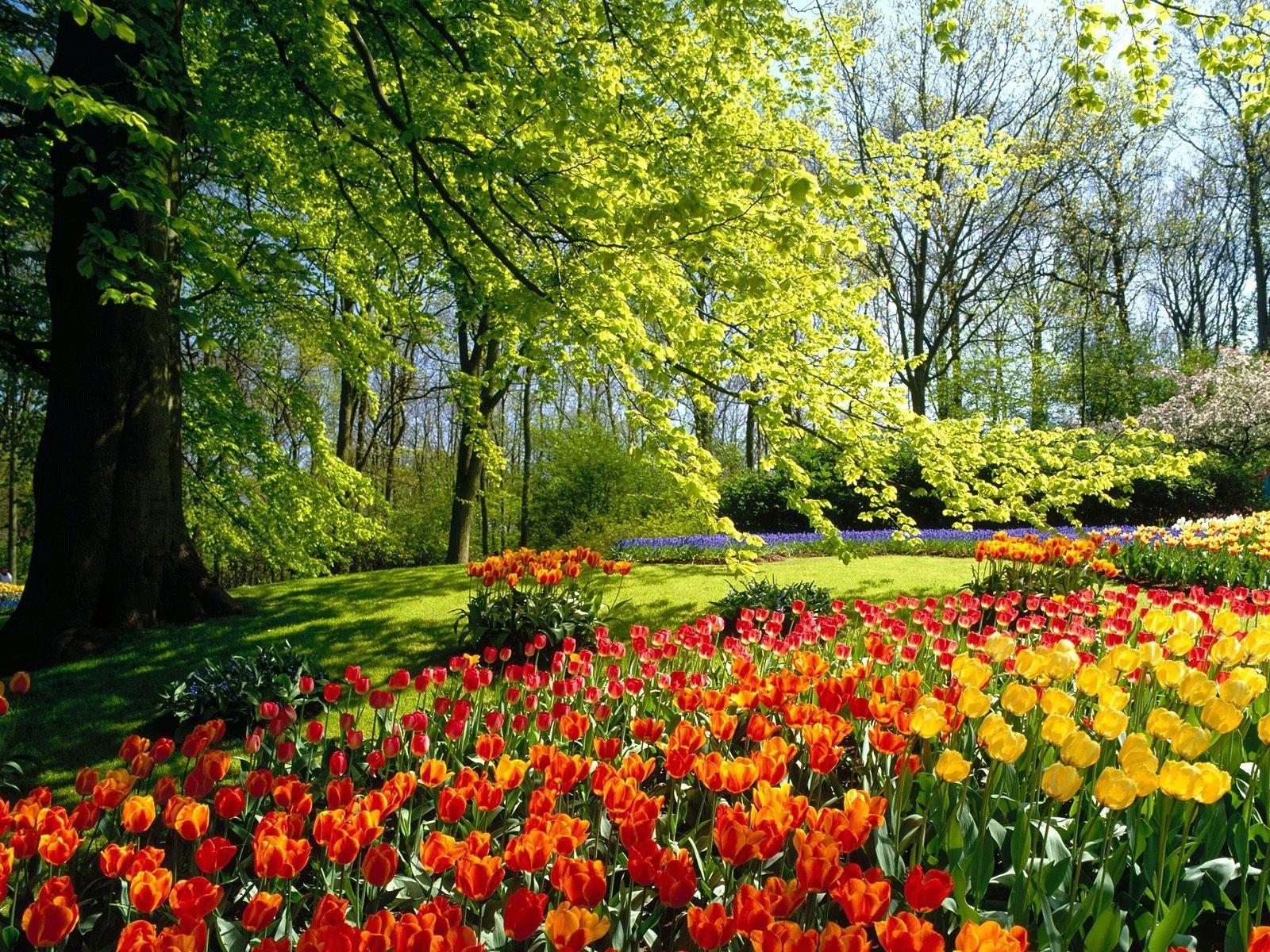 photo collection free spring desktop wallpaper background