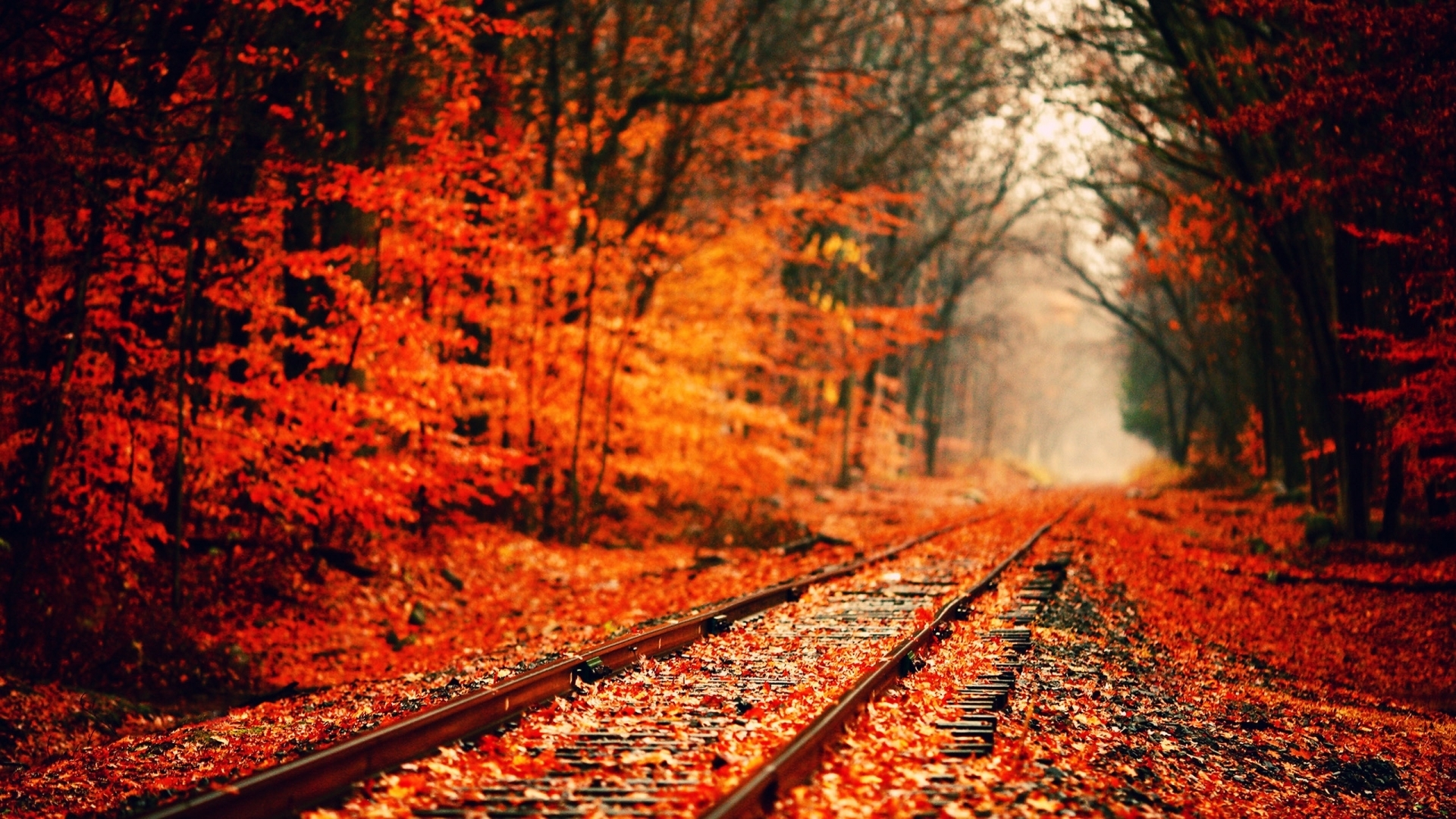 photo fall desktop wallpapers hd. - media file | pixelstalk