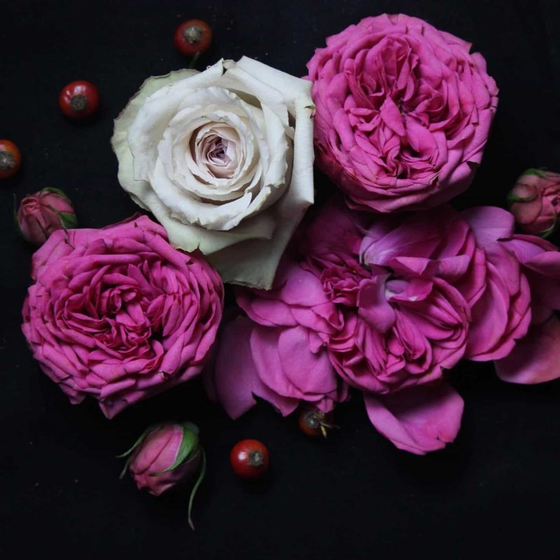 10 Best Roses On Black Background FULL HD 1920×1080 For PC Background 2018 free download photographing flowers against a black background the smell of 800x800