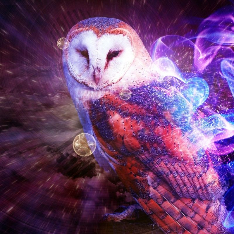 10 New Cool Backgrounds Of Animals FULL HD 1080p For PC Background 2018 free download photos images download animal owl backgrounds wallpaper wiki 800x800